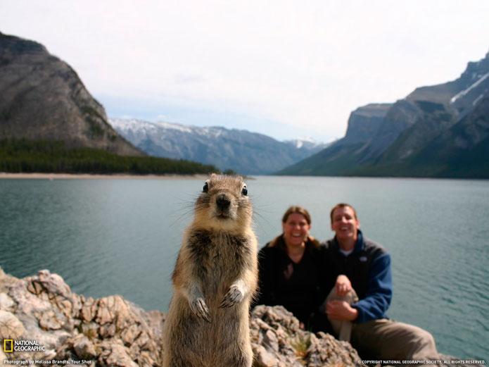 Un écureuil pris au piège de la culture visuelle