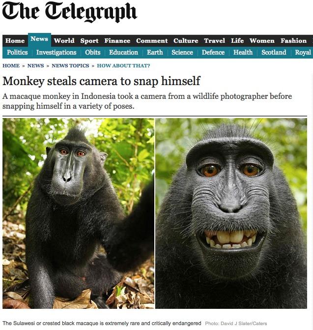 Le singe, le photographe et la propriété intellectuelle
